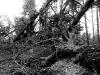 Skogen fotografie